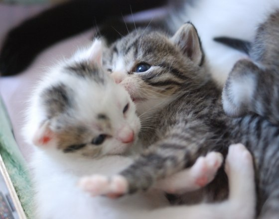 cute-kittens-hugging